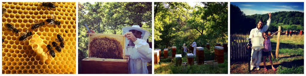 Les_Radis_Collage_Apiculture