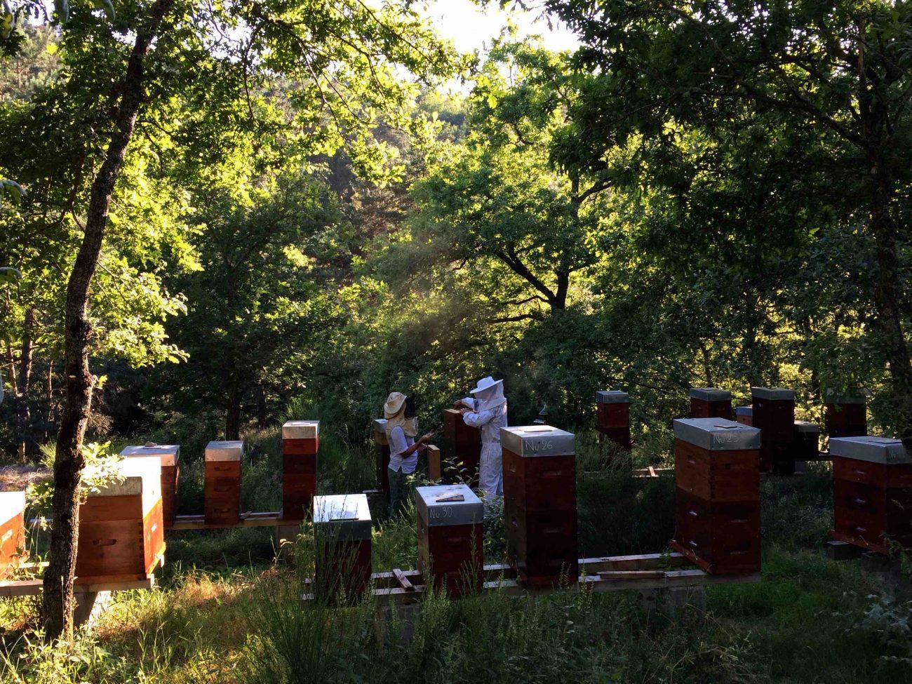 Mon initiation à l'apiculture au rucher des radis